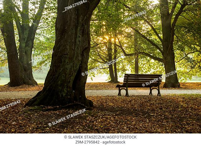 Autumn morning in Park Poludniowy (South Park), Wroclaw, Poland