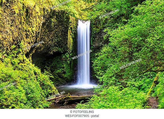 USA, Oregon, Multnomah County, Columbia River Gorge, Ecola Falls