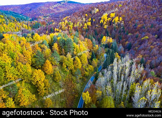 Aerial view of a decidual forest and road in autumn. Close to Irati area. Navarre, Spain, Europe