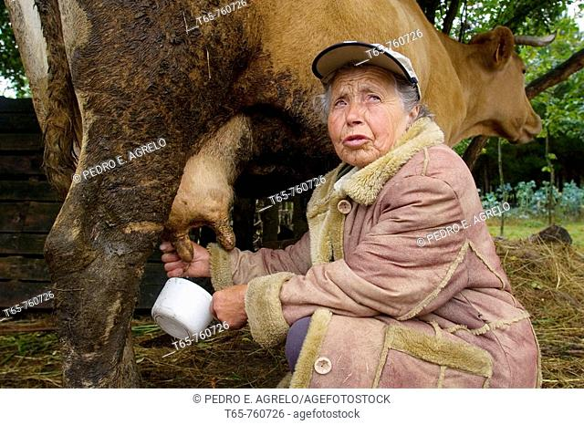 Maruxa milking a cow for their breakfast to the kittens