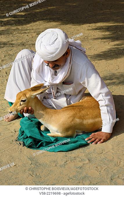 India, Rajasthan, Jodhpur region, Bishnoi environmentalist Khamu Ram petting a Chinkara (Indian gazelle)