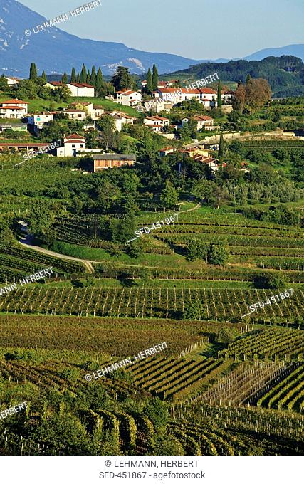 A wine-growing landscape near Dobrovo near the village of Brda, Slovenia