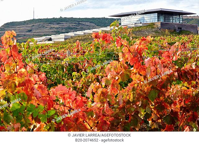 Vineyards. Winery Building Architect Iñaki Aspiazu. Bodegas Baigorri. Samaniego. Araba. Rioja Alavesa. Basque Country. Spain