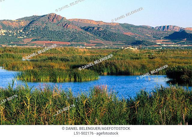 Landscape and Picayo mountain. Marjal del Moro. Valencia. Spain