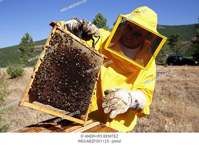 Beekeeper in protective suit holding frame with honeycomb