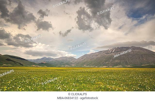 Europe, Italy, Umbria, Perugia district, Sibillini National park. Spring flowering