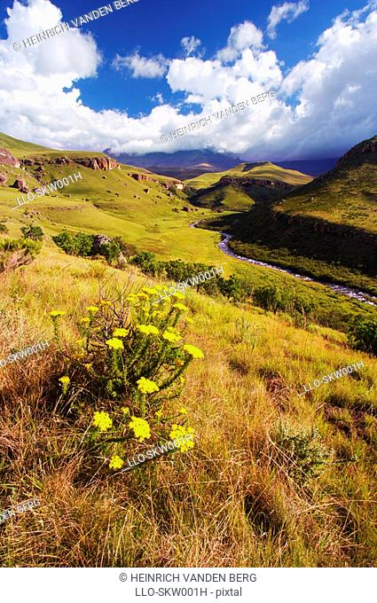 Scenic View of the Bushmans River Valley  Giants Castle Nature Reserve, Kwazulu Natal Province, South Africa