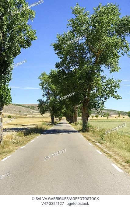 Straight roads between trees of Castilla, Spain