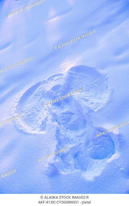 Close up of snow angel at sunset with blue and pink highlights winter Fairbanks Interior Alaska
