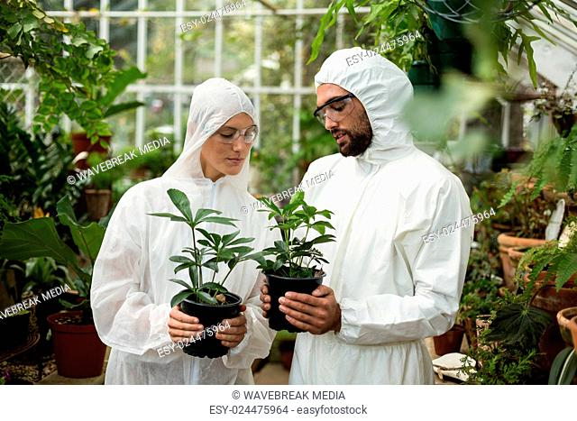 Scientists in clean suit holding potted plants