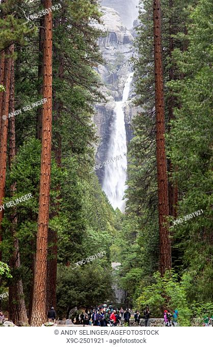 Lower Yosemite Falls, Yosemite National Park, California, USA