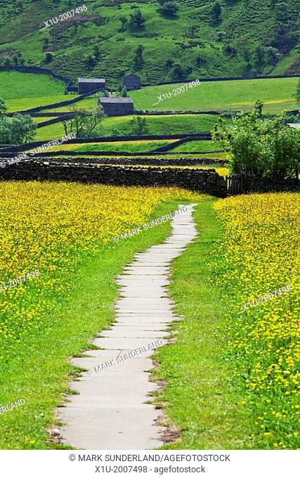 Footpath across Buttercup Meadows at Muker Swaledale Yorkshire Dales England