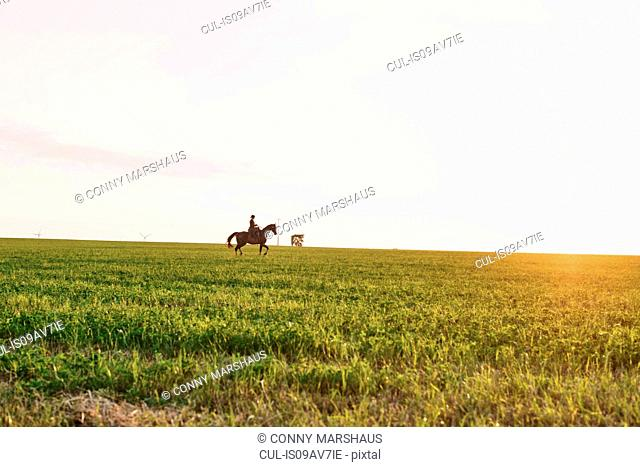 Distant view of woman riding horse in field