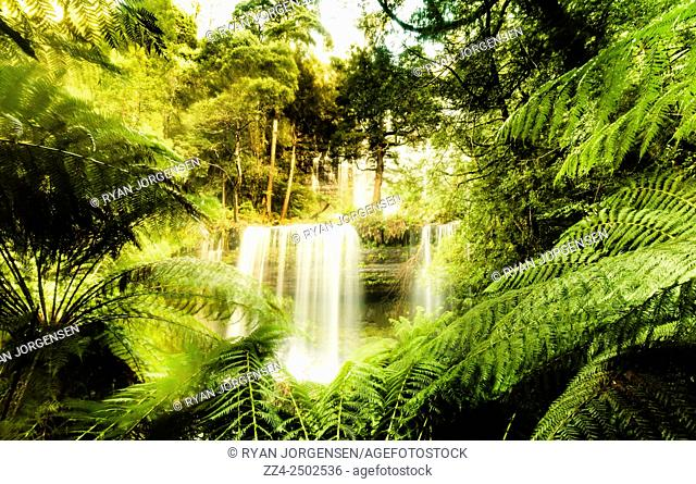 Enchanting waterfall landscape with wet fern clearing in lush green tropical rainforest. Russell Falls, Mount Field National Park, Tasmania, Australia