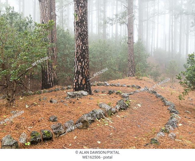 Footpath in misty pine forest on Tenerife, Canary Islands, Spain