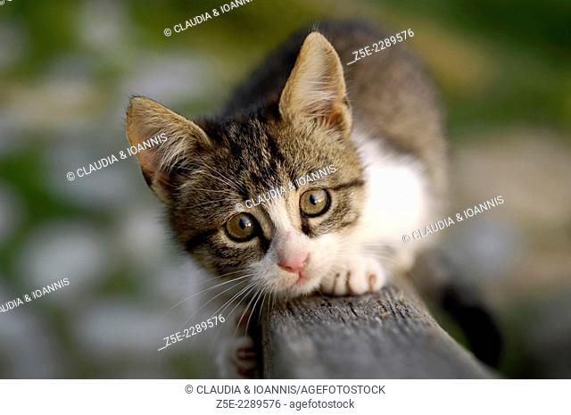 Kitten climbing on wooden banister towards camera