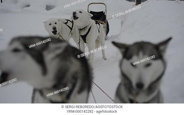 Salla husky safari. Lapland, Finland. Before the safari our guide will give you a driving lesson and tell you how to handle the sleigh
