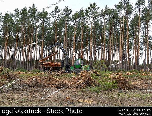 17 February 2020, Brandenburg, Grünheide: Felled pine logs will be loaded on the future Tesla Gigafactory site. Tesla is planning to build a gigafactory on this...