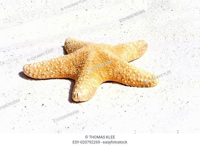 Einzelner Seestern im Sand