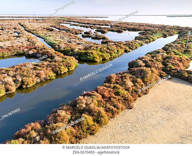 Salt marshes and Glass wort (Arthrocnemum fruticosum) at Tancada Lagoon. Ebro River Delta Natural Park, Tarragona province, Catalonia, Spain