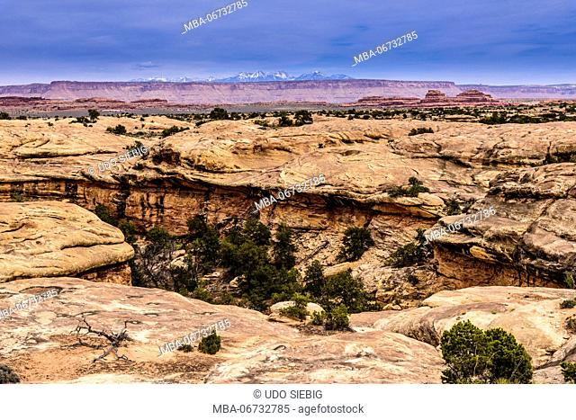 The USA, Utah, San Juan county, Moab, Canyonlands National Park, The Needles, Little Spring canyon, Slickrock Foot Trail
