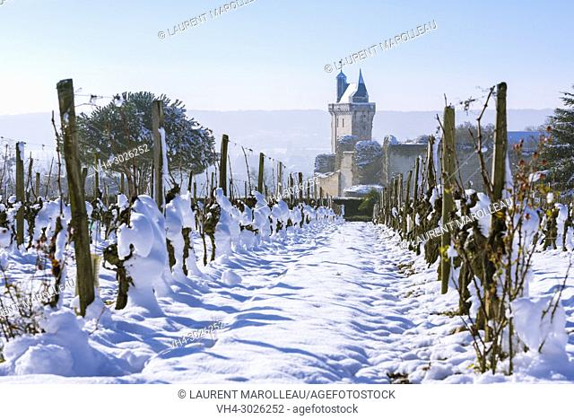 Vineyard and the Clock Tower of the Royal Fortress of Chinon in Winter. Indre-et-Loire, Central Region, Loire Valley, France, Europe