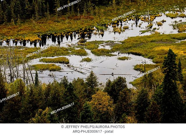 Beautiful nature photograph with view of swamp, Oberg Mountain hiking trail, Tofte, Minnesota, USA
