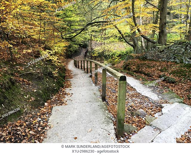 Autumn Colours in Goitsock Wood at Hallas Bridge near Cullingworth, West Yorkshire, England