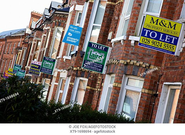 row of houses with to let signs in a student residential area of Belfast Northern Ireland UK