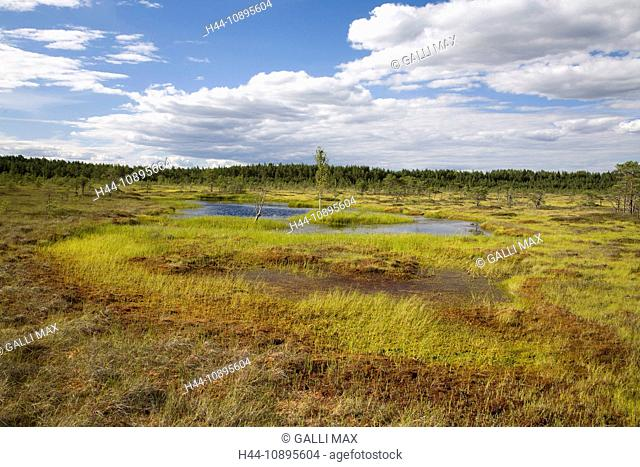Baltic States, Estonia, Europe, scenery, moor, national park, nature, nature reserve, park, Soomaa, Soomaa national park, marsh