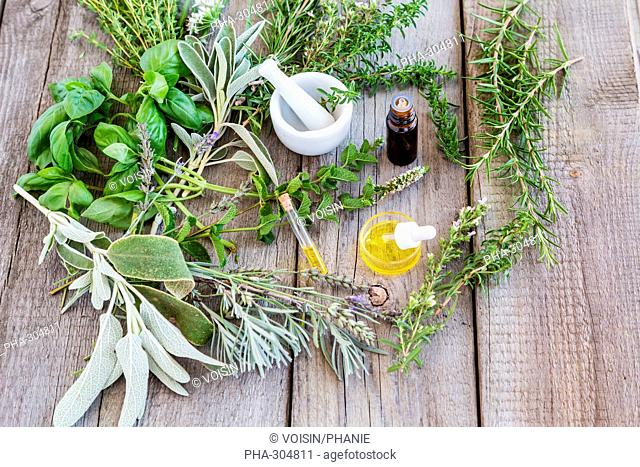 Assortment of herbs used fot essential oils