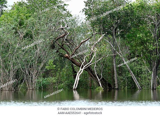 Brazil Amazonia Amazonas Manaus tropical forest rainforest landscape Taruma-A?u Igarape river tree plant