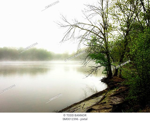 A foggy spring day on the shore of a lake. Skokie Lagoons north of Chicago