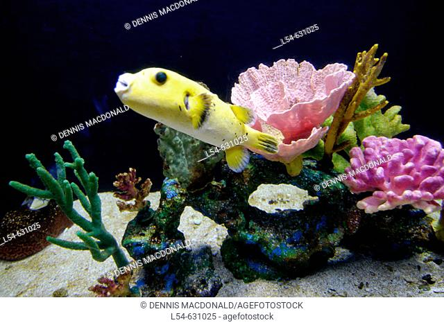 Living Coral and thousands of species of tropical fish and other aquatic animals are on display at the Florida Aquarium in Tampa Florida. USA