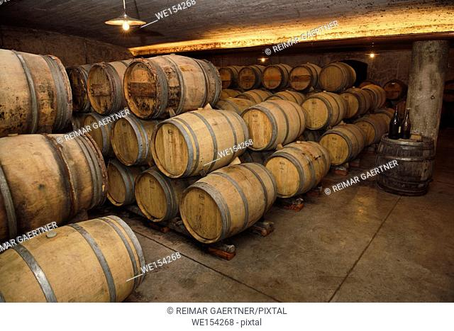 Constant humidity temperature underground arched cellar with French barrique oak barrels at Kabaj Morel winery Slovrenc Dobrovo Brda Slovenia