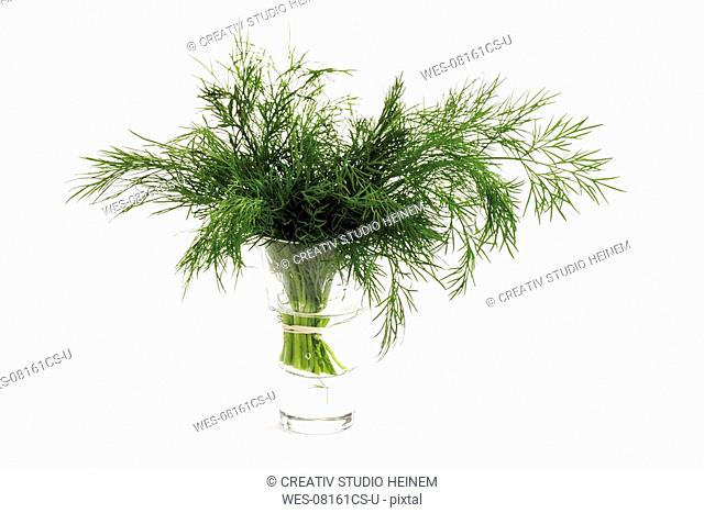 Dill in water glass