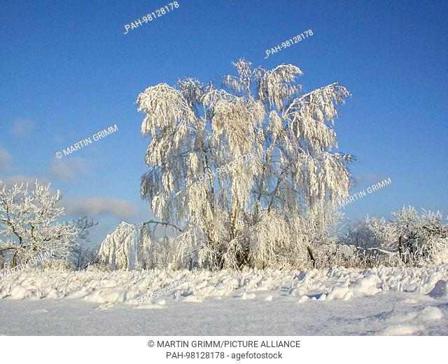 winter scenery in snowy countryside, Brandenburg, Germany | usage worldwide. - /Brandenburg/Germany
