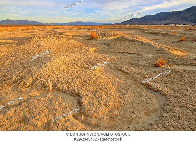 Mesquite Sand dunes- hardpan mud tiles with desert vegetation, Death Valley National Park, California, USA