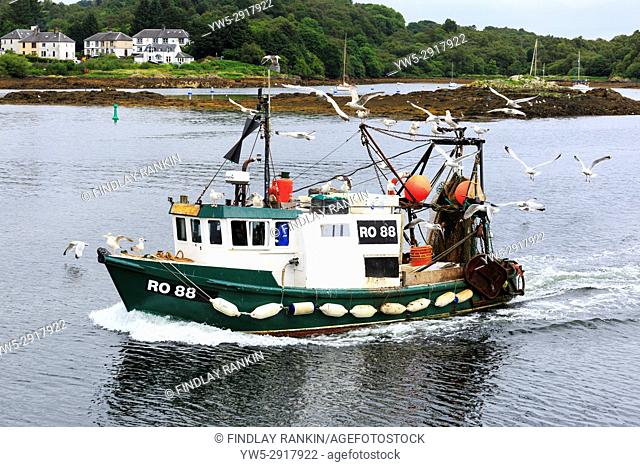 Fishing boat coming into Tarbert harbour, Loch Fyne surrounded by seagulls, Scotland, UK