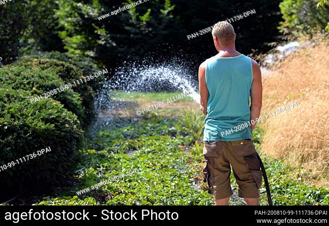 10 August 2020, Saarland, Merzig: A man irrigates plants and bushes that were planted a year ago. The persistent drought increases the risk of fire