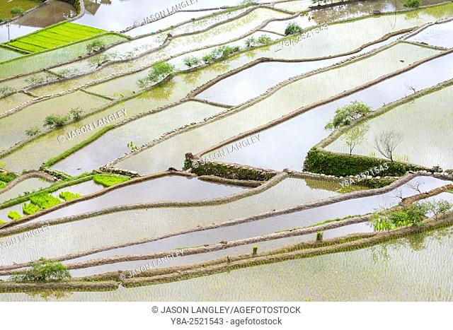 Elevated view of flooded rice terraces during early spring planting season, Batad, Banaue, Mountain Province, Cordillera Administrative Region, Philippines