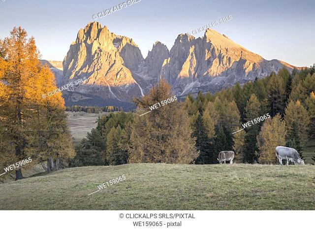 Alpe di Siusi with Mount Sassolungo and Mount Sassopiatto on yhe background, South tyrol, Italy