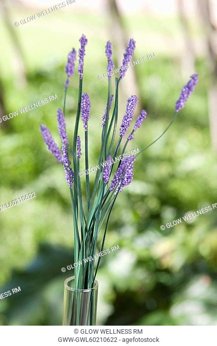 Close-up of lavender flowers in a vase