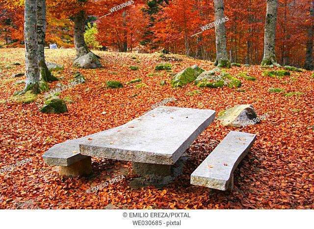 Picnic area in beechwood. Pyrenees Mountains region, Alta Ribagorça. Catalonia, Spain