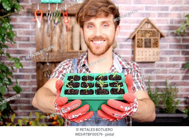 Smiling young gardener holding container with tomato seedlings