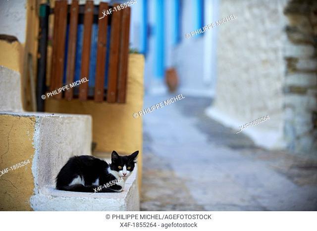 Greece, Cyclades islands, Cyclades cat