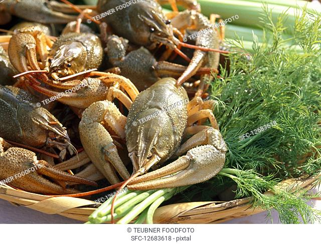Fresh crayfish with herbs in a basket