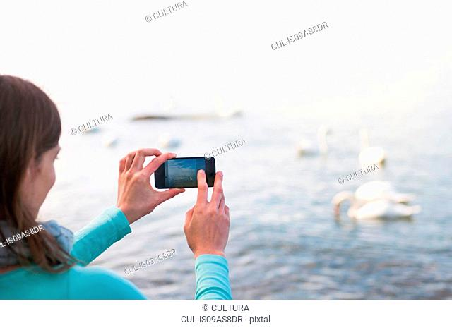 Mid adult woman taking photograph of swans, using smartphone