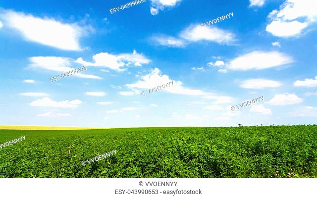 country landscape - blue sky with white clouds over green medicago field near village L'Epine Marne in sunny summer day in Champagne region of France