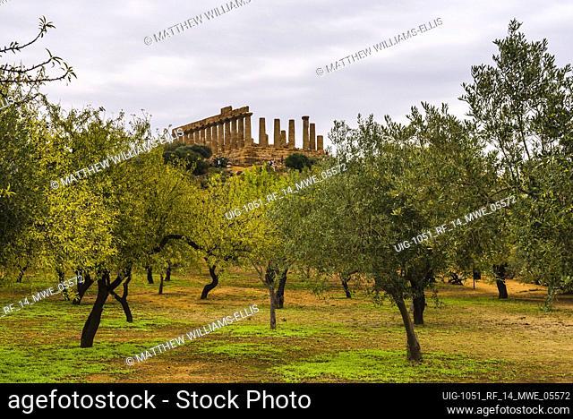 Valley of the Temples (Valle dei Templi), olive trees and Temple of Juno (Tempio di Giunone), Agrigento, Sicily, Italy, Europe